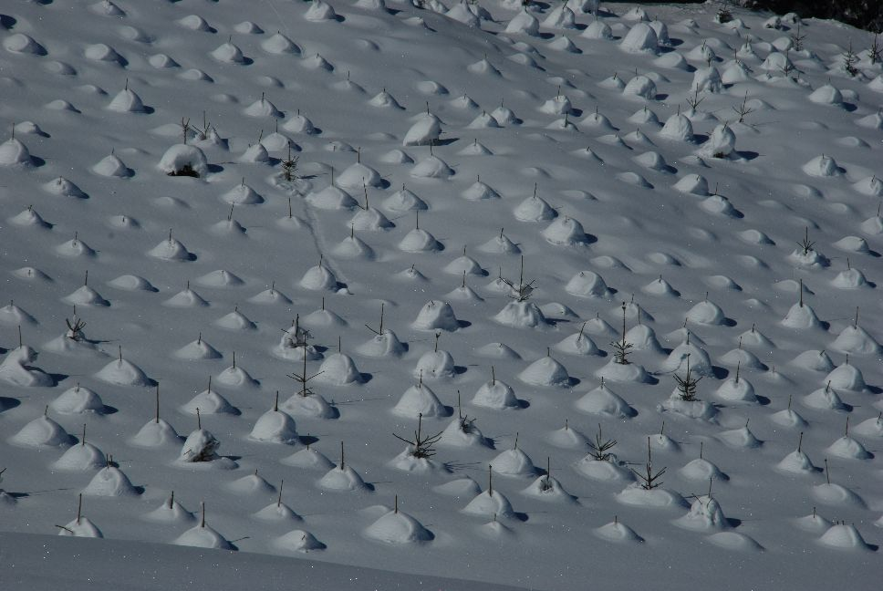 Snow Patterns